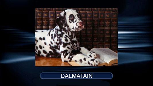 Dalmattt