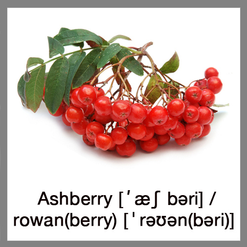ashberry-