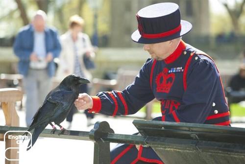 Стражники воронов в Лондонском Тауэре