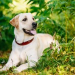 Top British dog breeds popular in England