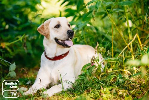 British dog breeds