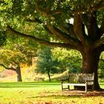 Потрясающие и красочные сады Лондона