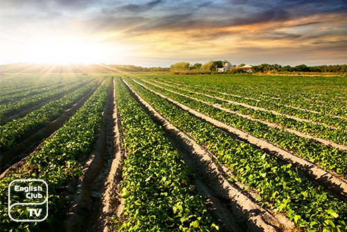 Сельское хозяйство Англии
