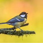 Popular British garden birds